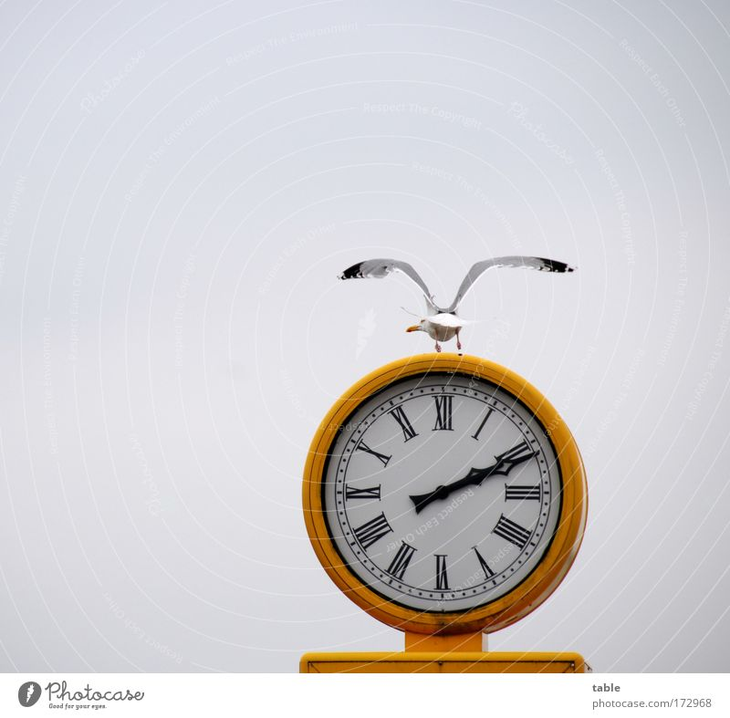 (KI09.01) departure time Farbfoto Textfreiraum links Textfreiraum oben Lifestyle Ferien & Urlaub & Reisen Uhr Umwelt Natur Himmel Wolken Wetter Meer Luftverkehr