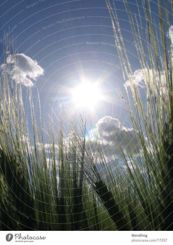 Sonnenfeld Feld Lichtschweif Wolken um die Sonne herum schöner Tag