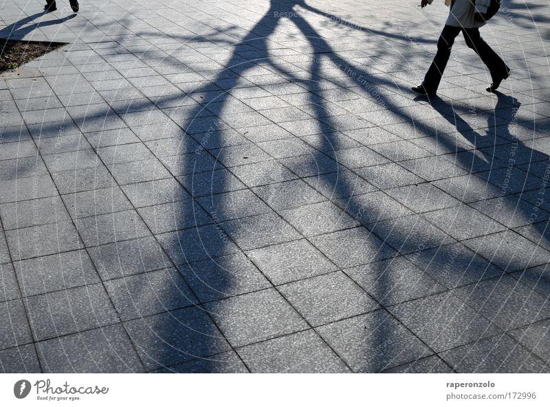 alle müssen was tun Mensch Baum Stadt Arbeit & Erwerbstätigkeit Wege & Pfade gehen laufen Geschwindigkeit einzigartig Quadrat Richtung Fußweg Baumkrone