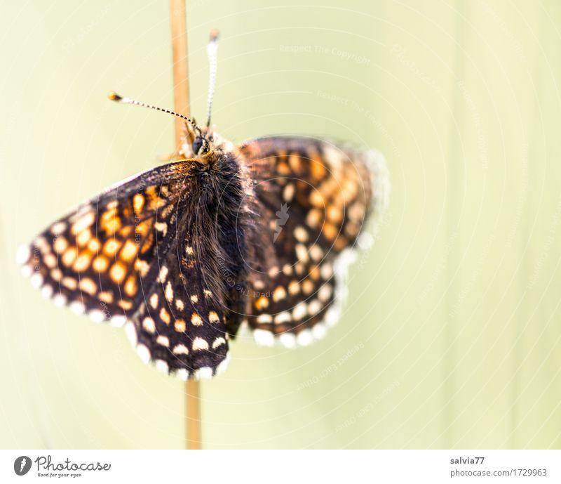 Sonne tanken Natur Sommer schön Erholung Tier Umwelt Wärme Liebe Glück Wildtier genießen Flügel Warmherzigkeit Schönes Wetter Insekt