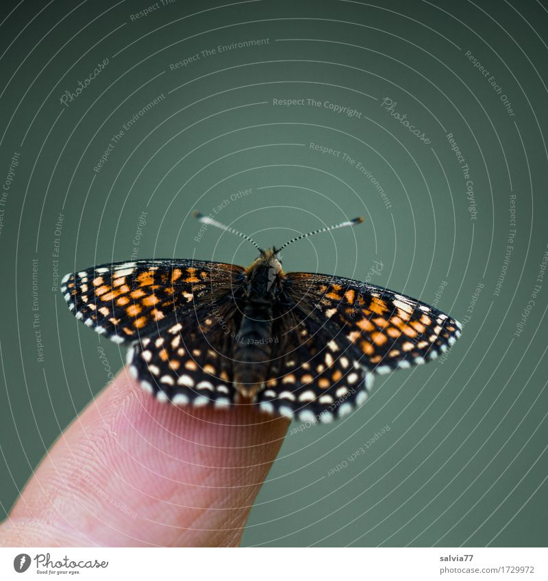 fliegt er gleich...? Natur Sommer schön Tier ruhig Umwelt fliegen frei Wildtier ästhetisch Beginn Perspektive genießen Flügel einzigartig beobachten