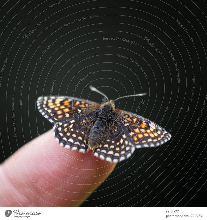 flieg nicht so hoch... Natur Tier schwarz Umwelt klein orange Wildtier Flügel niedlich Pause Gelassenheit Insekt Schmetterling Leichtigkeit Fürsorge geduldig
