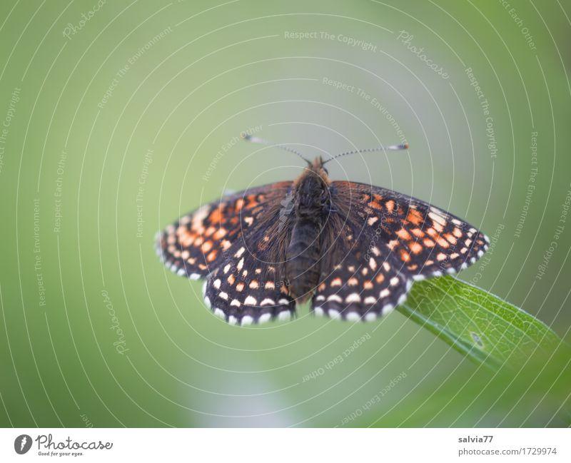 erst mal Sonne tanken Natur Sommer Pflanze Blatt Wiese Tier Schmetterling Flügel Insekt 1 genießen schön grün orange schwarz ästhetisch einzigartig Erholung