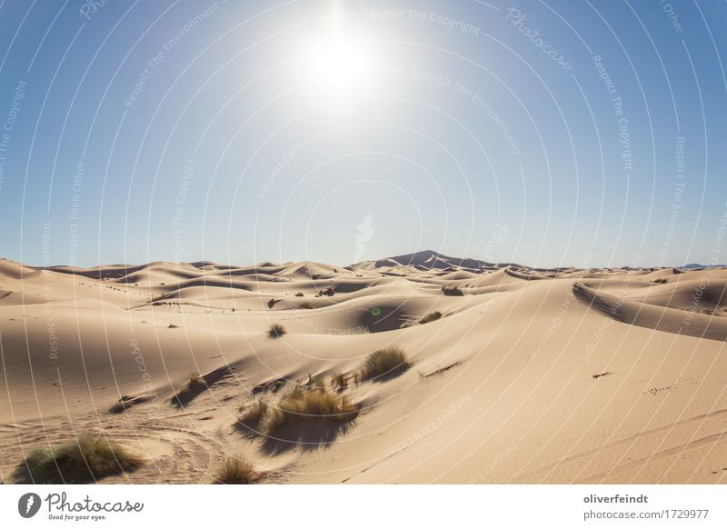 Sahara Ferien & Urlaub & Reisen Ausflug Abenteuer Ferne Freiheit Expedition Umwelt Natur Landschaft Urelemente Sand Himmel Wolkenloser Himmel Horizont Sonne