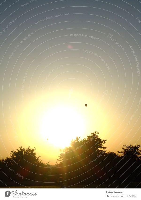 Der Sonne entgegen I Himmel Natur blau Baum Sonne Einsamkeit schwarz Ferne gelb Freiheit Wärme Luft hell Zufriedenheit Horizont Abenteuer