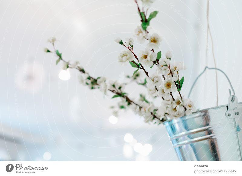 Natur Pflanze schön Blume Freude Leben Liebe Gefühle Lifestyle Stil Feste & Feiern Party Lampe Stimmung Design Wohnung