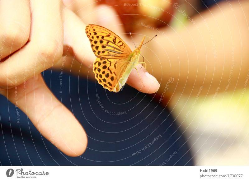 Schmetterling sitzt auf dem Zeigefinger einer Hand Natur schön Tier ruhig orange Finger berühren Neugier nah Gelassenheit Vertrauen Geborgenheit geduldig