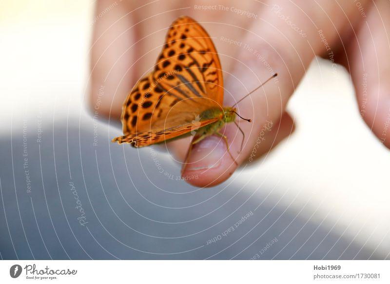 Schmetterling sitzt auf dem Zeigefinger einer Hand schön Tier ruhig natürlich Glück außergewöhnlich Zusammensein orange Freundschaft träumen Zufriedenheit