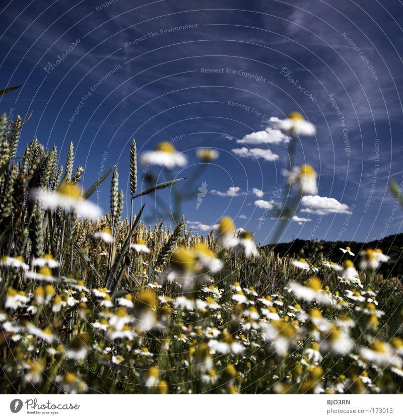 5 Min. heile Welt Natur schön Himmel weiß Blume grün blau Pflanze Sommer Wolken Tier gelb Wiese Blüte Gras Wärme