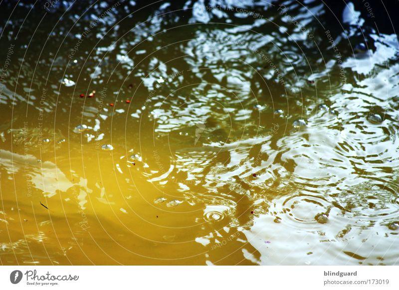 Don't Drink The Yellow Water Natur Wasser grün blau Sommer Freude schwarz gelb Wellen dreckig Umwelt nass Kreis Flüssigkeit Planschbecken