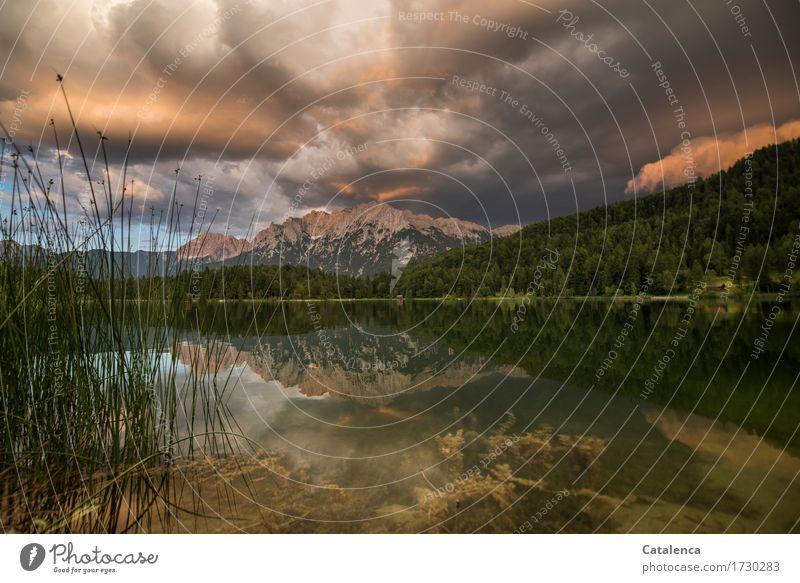 Gewittrig Natur Ferien & Urlaub & Reisen Pflanze Sommer Wasser Landschaft Berge u. Gebirge Umwelt natürlich Schwimmen & Baden Stimmung Horizont Luft Angst