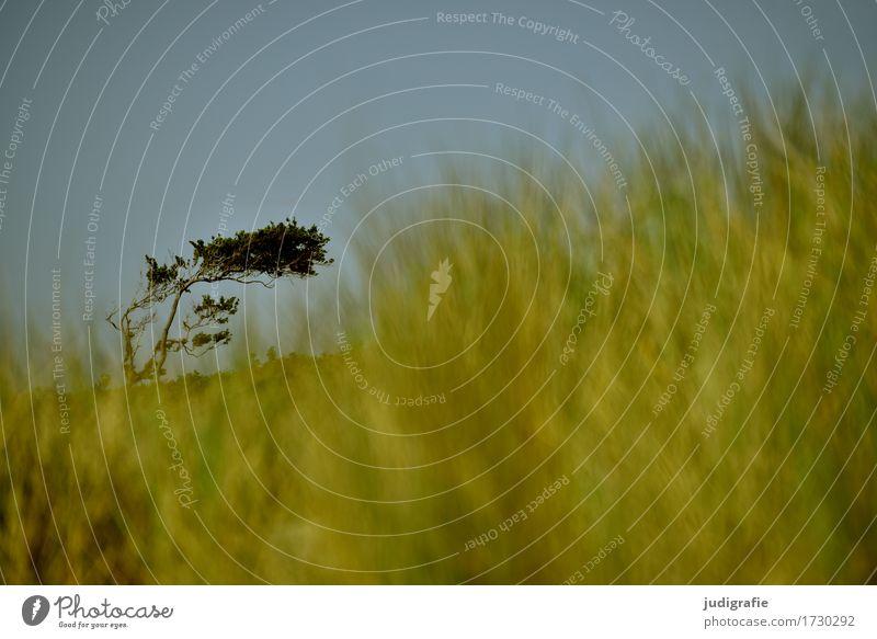Weststrand Umwelt Natur Landschaft Pflanze Himmel Wolkenloser Himmel Klima Wind Sturm Baum Gras Küste Strand Ostsee Fischland Fischland-Darß-Zingst natürlich