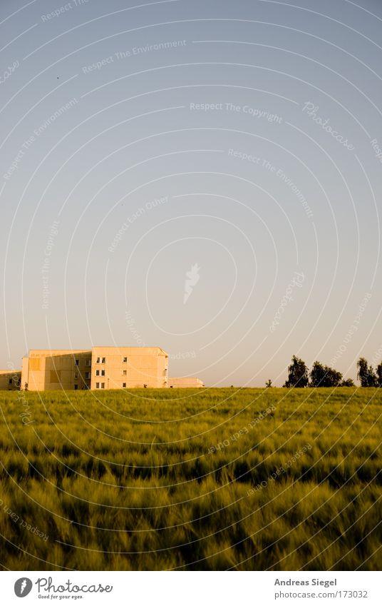 Stadt, Land, kein Fluss Farbfoto Außenaufnahme Menschenleer Textfreiraum oben Textfreiraum Mitte Tag Abend Sonnenlicht Umwelt Natur Landschaft Himmel