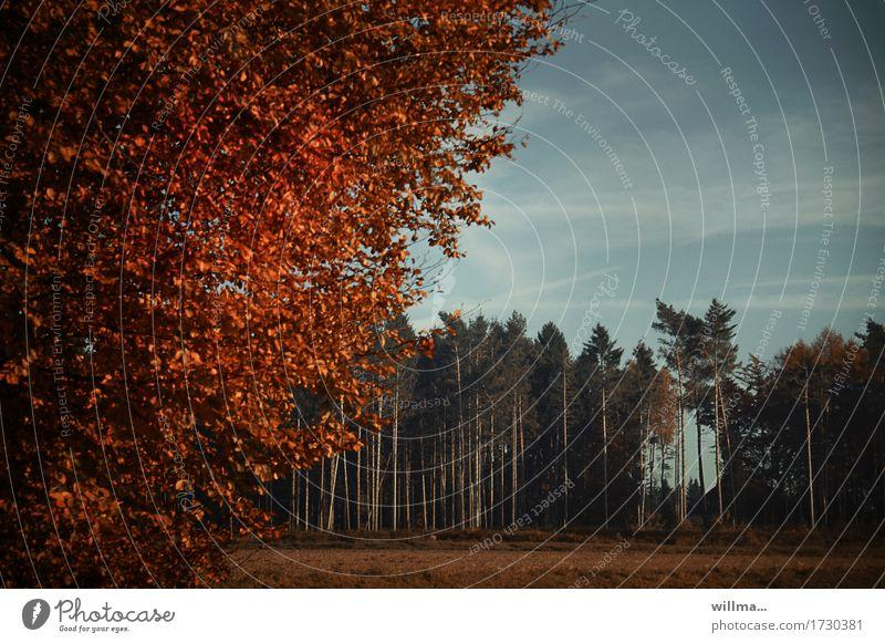 offene verwaldungsstelle II Natur Landschaft Herbst Schönes Wetter Baum Laubbaum Buche Feld Wald Nadelwald natürlich herbstlich Herbstfärbung Herbstlandschaft