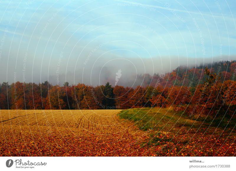 bunt sind schohon die wälder... Natur Landschaft Herbst Nebel Blatt Herbstlaub herbstlich Herbstfärbung Herbstwetter Herbstwald Herbstlandschaft Feld natürlich