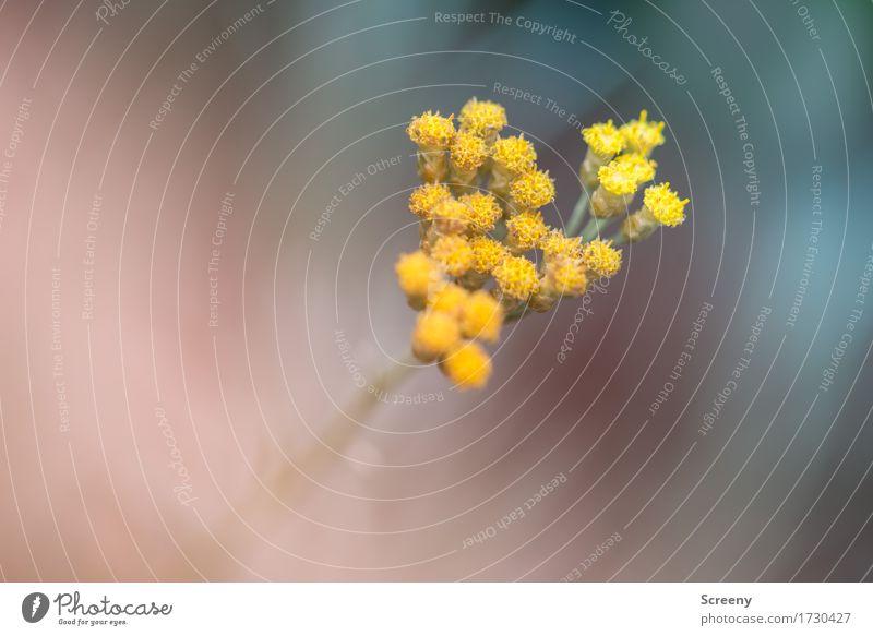 Gelbes Pack Natur Pflanze Blume gelb Wiese klein Park Wachstum Sträucher Blühend