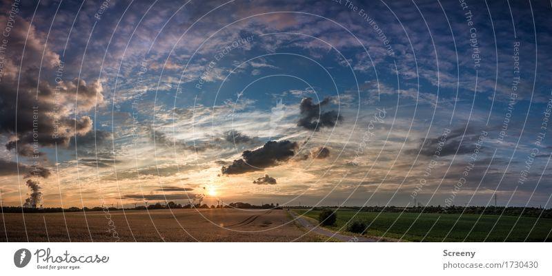 Heimkehr Himmel Natur Pflanze Sommer Sonne Landschaft Wolken ruhig Umwelt Wege & Pfade Wiese Horizont Feld Luft Erde Schönes Wetter