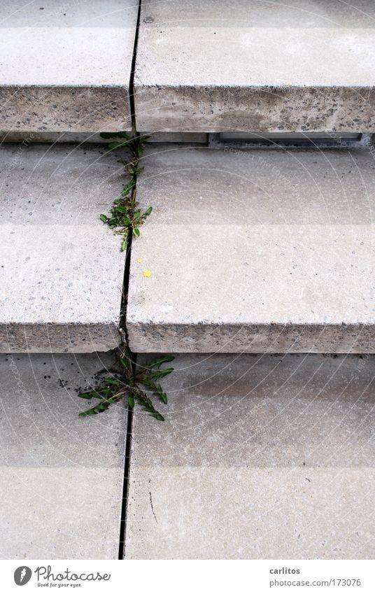 EXPO Gelände .... alt Pflanze Einsamkeit kalt Architektur grau Wege & Pfade Traurigkeit Park Zeit Beton Ordnung Treppe modern trist Kultur