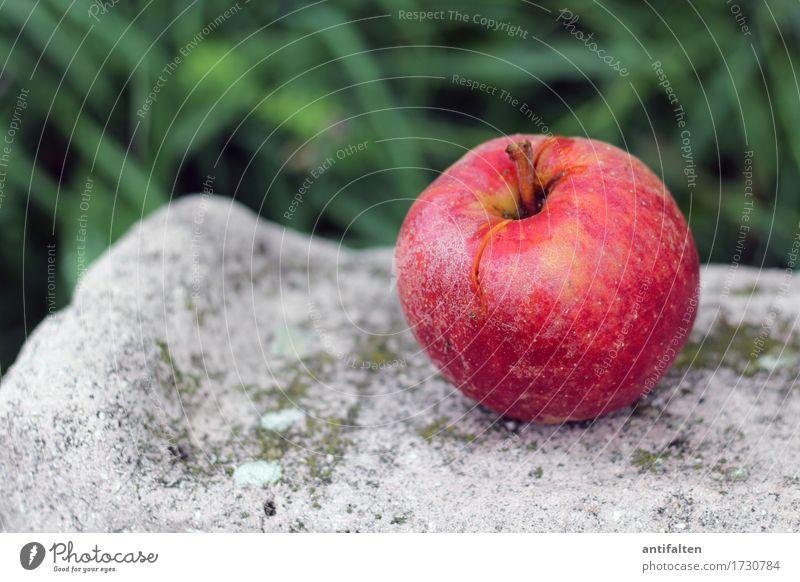 Rotbäckchen Lebensmittel Frucht Apfel Stengel Ernährung Essen Frühstück Mittagessen Bioprodukte Vegetarische Ernährung Diät Fasten Saft Umwelt Natur Sommer