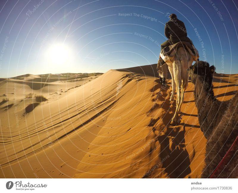 Sahara II Reiten Ferien & Urlaub & Reisen Tourismus Ausflug Abenteuer Ferne Freiheit Expedition Sommer Sommerurlaub Sonne Strand Junger Mann Jugendliche