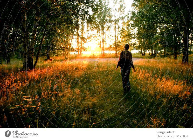 Am Ende des Waldes Mensch Natur Baum Sonne Einsamkeit ruhig Wald Freiheit Gras Glück Erde Ausflug Spaziergang einzeln Idylle Schönes Wetter