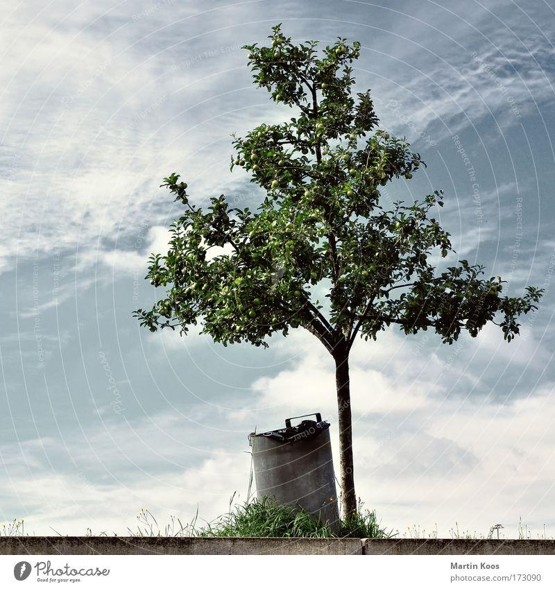 Abfall Lebensmittel Garten Müllbehälter Baum Treppe Verpackung Sack Metall alt Klima Natur Umwelt Umweltverschmutzung Ernte Fass Gras wegwerfen Farbfoto