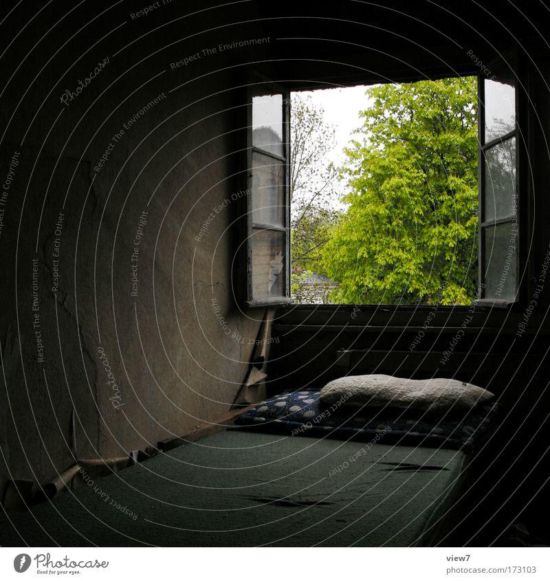 Schlafgemach alt Baum grün Sommer Haus Tier dunkel Fenster Stein Landschaft Raum dreckig Glas Umwelt trist