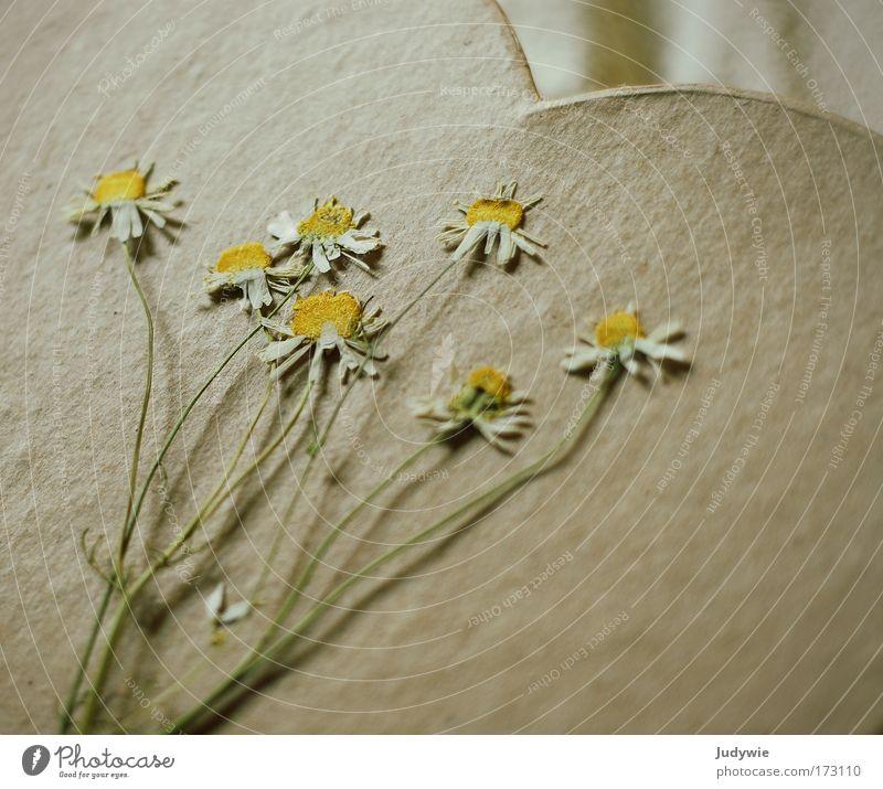 Romantik Natur alt Pflanze schön Sommer Blume Umwelt gelb Traurigkeit Blüte Gefühle Frühling natürlich Kunst Zufriedenheit Dekoration & Verzierung