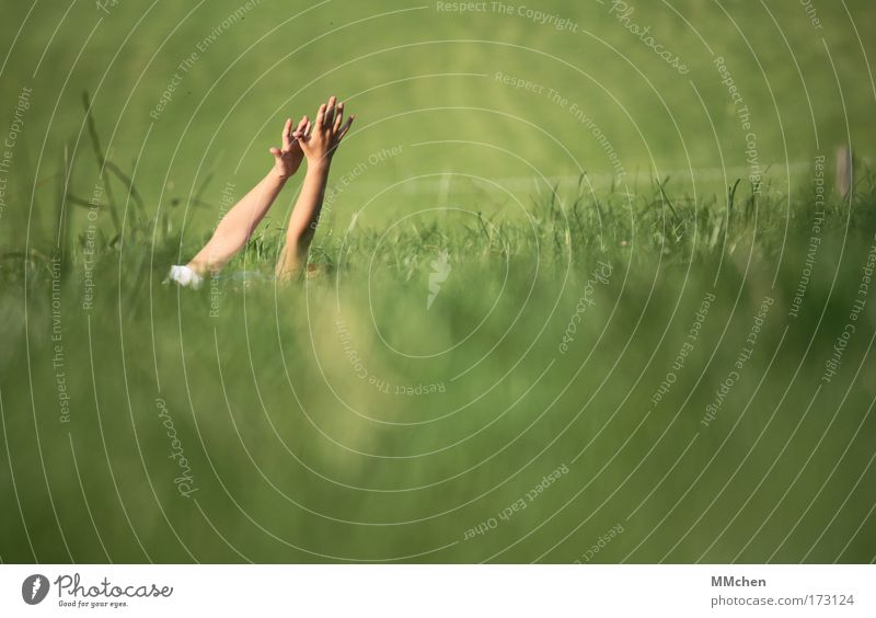 den wind fühlen Natur Hand grün Erholung Wiese Spielen Gras träumen Luft Zufriedenheit Arme Wind Umwelt liegen Lebensfreude Kindheit