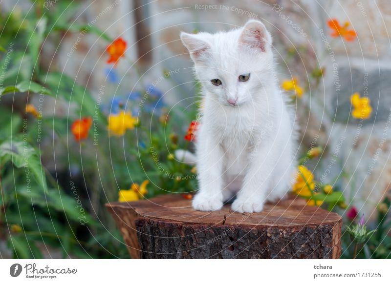 Kleine weiße Katze schön Sommer Garten Natur Tier Blume Gras Pelzmantel Haustier sitzen klein niedlich grün Katzenbaby heimisch vereinzelt Bilder gestreift