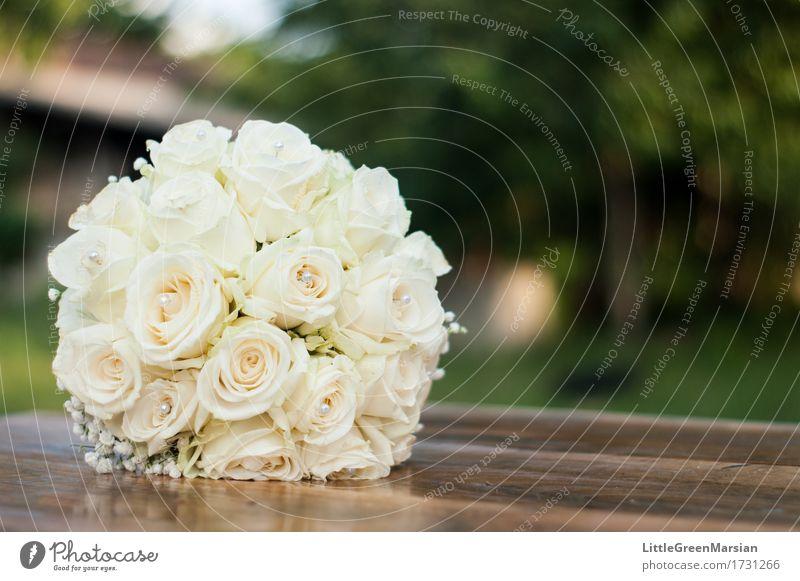 Der Blumenstrauß der Braut [2] Natur Pflanze schön weiß Umwelt gelb Blüte Liebe Gefühle Gras Holz Garten braun Zusammensein hell