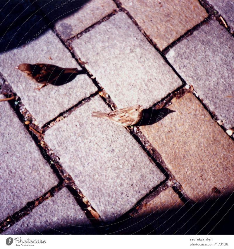 schräge spatzen Sommer Tier Stein Freundschaft braun Zusammensein Vogel Fröhlichkeit Platz beobachten Neugier niedlich Appetit & Hunger Wachsamkeit Interesse frech