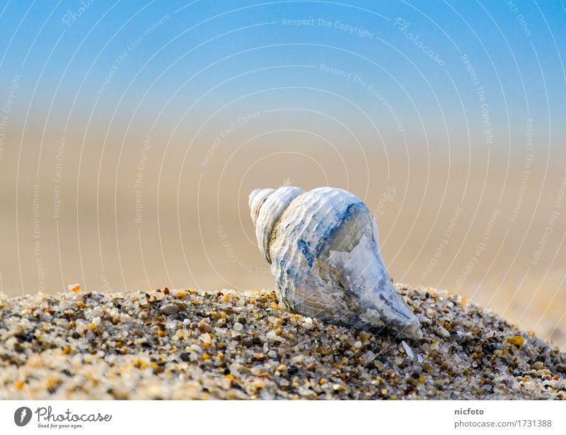 Muschel am Strand Sommer Sand Wasser Sonne Schönes Wetter Küste Nordsee Ostsee Meer Zufriedenheit Vertrauen ruhig Shell Snail brown gravel object ocean pensive