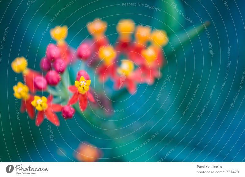 Secret Nature schön Sommer Garten Umwelt Landschaft Pflanze Herbst Blume Blatt Blüte Feld Wald sportlich authentisch einfach Erotik exotisch frisch hell