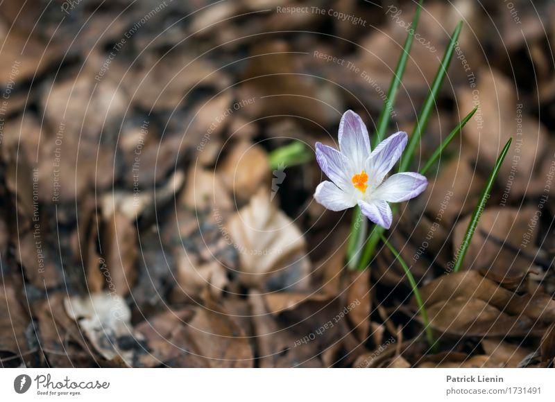 Frühlingserwachen Natur Pflanze Farbe schön grün Blume Landschaft Blatt Umwelt Wiese natürlich Gras Garten wild Park Dekoration & Verzierung