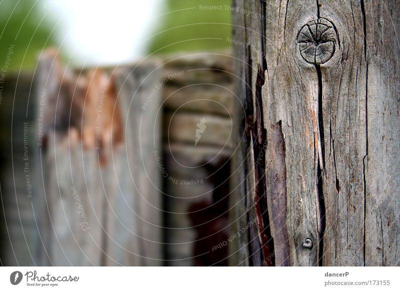 Broken City Natur Baum Sommer Wiese Holz Garten Park Wind Feld Angst Sträucher Glaube Gewalt Sturm Urwald Wachsamkeit