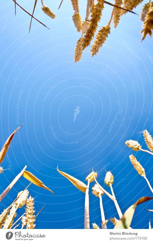 cornflakes#2 Himmel Natur blau Sommer Pflanze Sonne Landschaft gelb Wärme hell Gesundheit liegen Feld Zufriedenheit authentisch frei