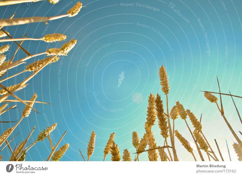 cornflakes Himmel Natur blau Sommer Sonne Erholung gelb Wärme Leben Freiheit Gesundheit träumen Stimmung liegen Feld Ausflug
