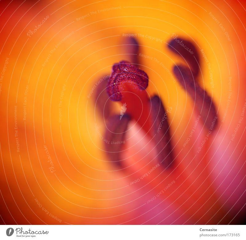 Empfindungen II Farbfoto mehrfarbig Außenaufnahme Nahaufnahme Detailaufnahme Makroaufnahme abstrakt Menschenleer Tag Licht Schatten Kontrast