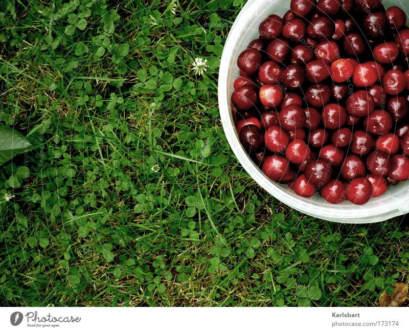 kirschen. im gras. Natur Sommer Ernährung Gras Garten Lebensmittel Gesundheit Arbeit & Erwerbstätigkeit Frucht Design frisch süß Ernte Lebensfreude Duft genießen