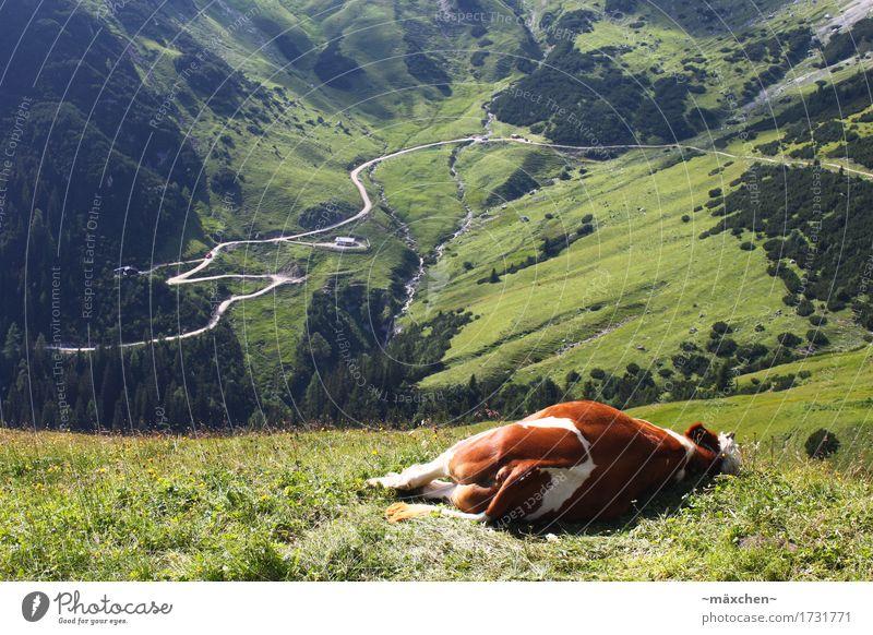 Einfach mal abspannen... Natur Ferien & Urlaub & Reisen Sommer grün Landschaft Erholung Tier ruhig Berge u. Gebirge natürlich Glück Freiheit Stimmung Zufriedenheit Luft wandern