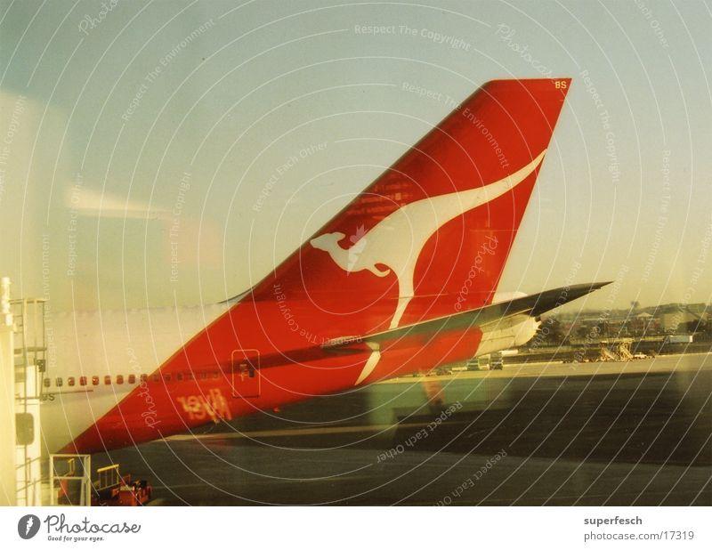 Kangarot Flugzeug Luftverkehr Heck Känguruh