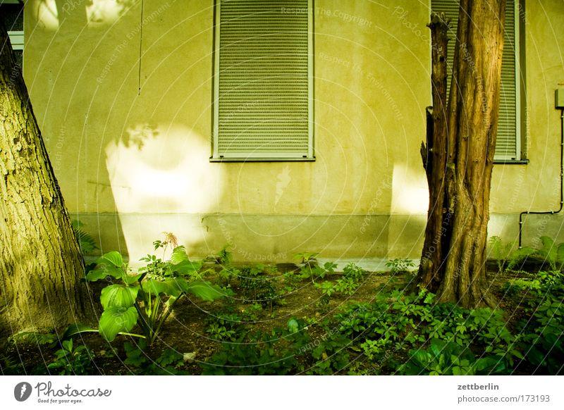 Licht im Hinterhof Stadt Baum Sonne Haus Fenster Garten Gebäude Wohnung Fassade Häusliches Leben Gesetze und Verordnungen Hof Mieter Stadthaus