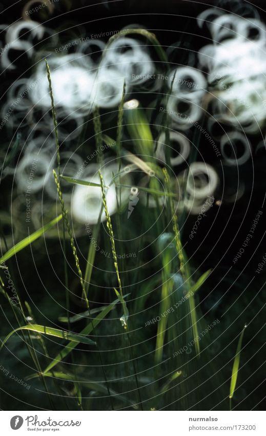 Morgenerwachen im Grasbett Natur Baum Pflanze ruhig Leben Garten Freiheit Park Zufriedenheit glänzend Wassertropfen frisch liegen Kitsch beobachten