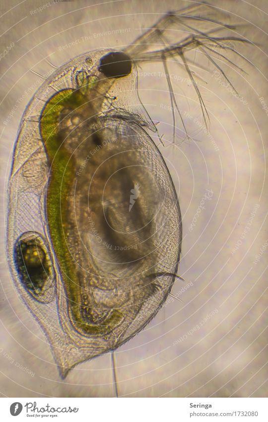 Durchleuchtet Wissenschaften Labor Fotokamera Wasser Teich See Tier Wildtier Tiergesicht Aquarium 1 Mikroskop Schwimmen & Baden gruselig mehrfarbig gelb gold