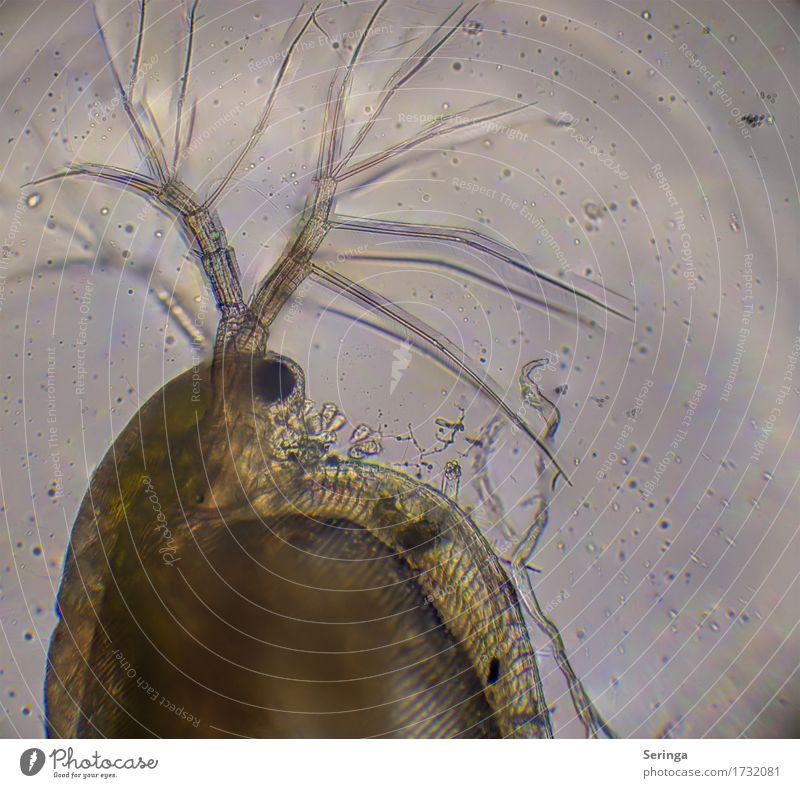 Durchs Mikroskop geschaut Pflanze Wasser Tier Wildtier Wassertropfen beobachten Tropfen nah Wissenschaften Tiergesicht Teich Lupe mikroskopisch Wasserfloh