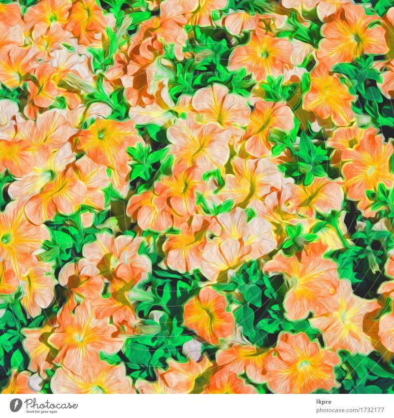 Oman Blumen und Garten gemalt Natur Pflanze blau Sommer schön grün weiß rot Blatt Blüte Wiese Gras rosa hell