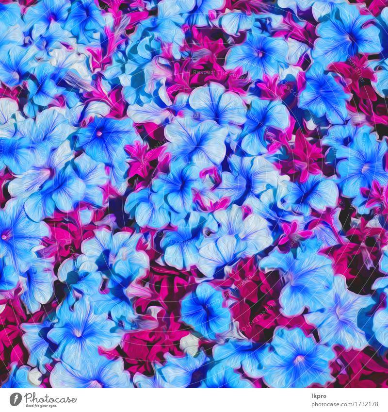 n Blumen und Garten gemalt schön Sommer Natur Pflanze Gras Blatt Blüte Wiese Blühend Wachstum frisch hell wild blau grün rosa rot weiß aromatisch Hintergrund