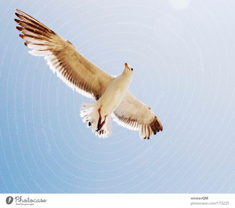 Easy. Meer Sommer Strand Ferien & Urlaub & Reisen ruhig Erholung oben Luft Vogel fliegen hoch Ausflug Luftverkehr Feder Gelassenheit Neugier