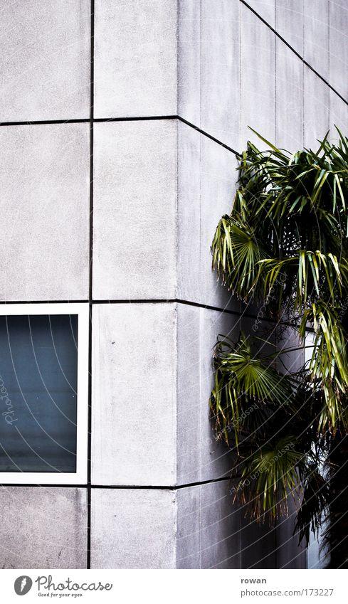 palmenidyll weiß Stadt grün Haus kalt Wand Fenster Mauer Gebäude Architektur Beton Fassade Bankgebäude Quadrat Bauwerk